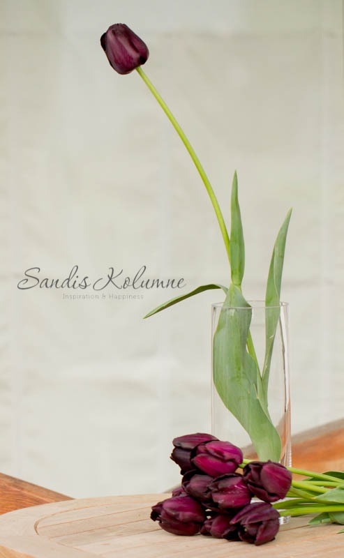 Tulpe Schwarze Perle