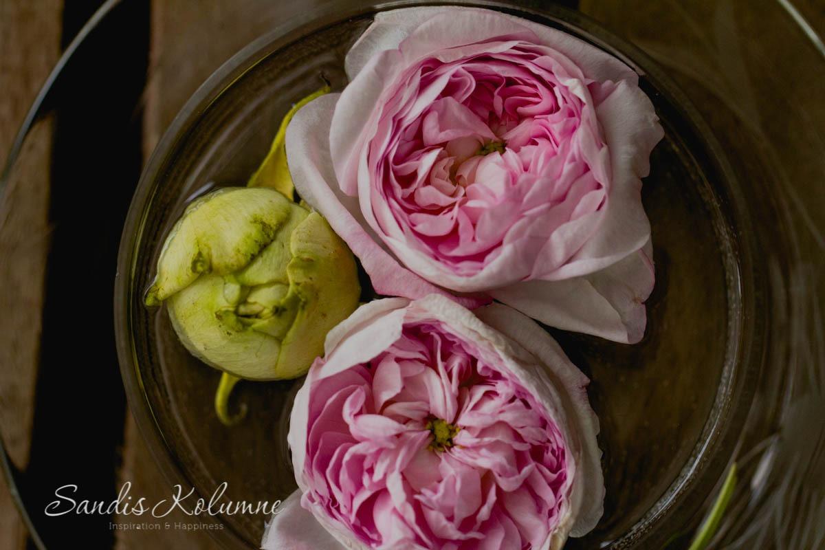 Rosen in Butterdose