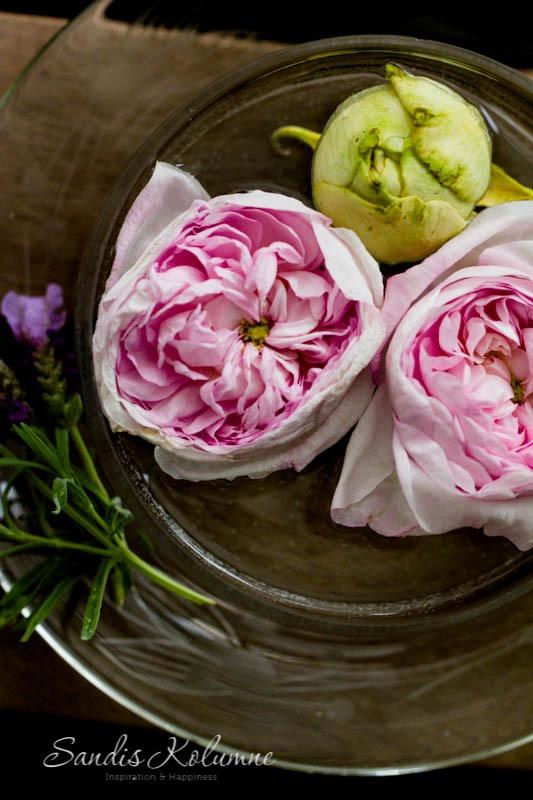 Rosen in Butterdose 2