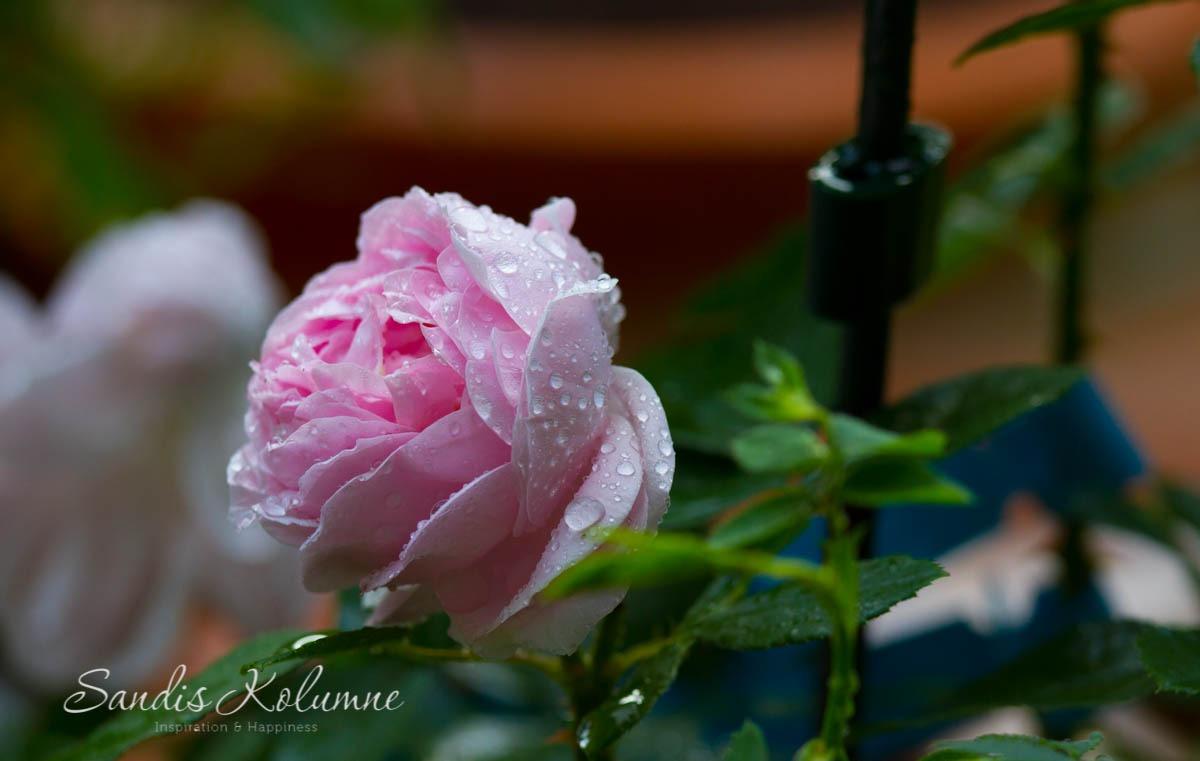 Regenschnappschuss 2