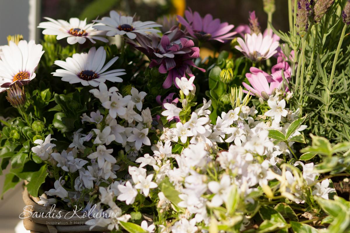Blumenkästen 4