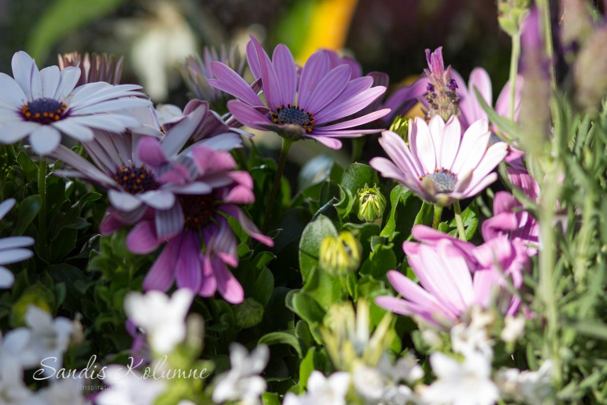 Blumenkästen 5