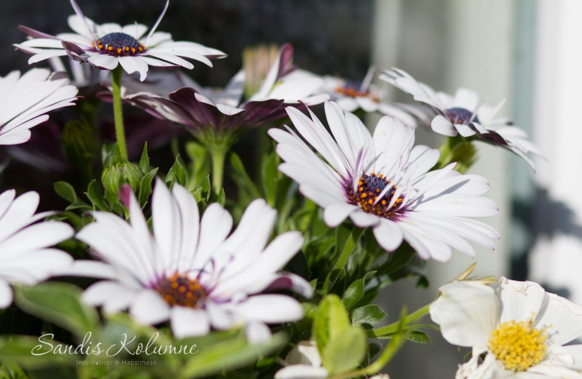 Blumenkästen 6