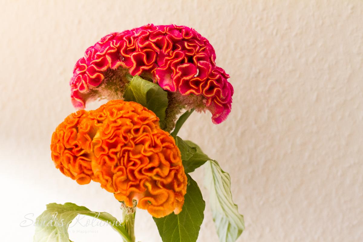 Flower Friday Pfingst, Rosen und Birnen 8