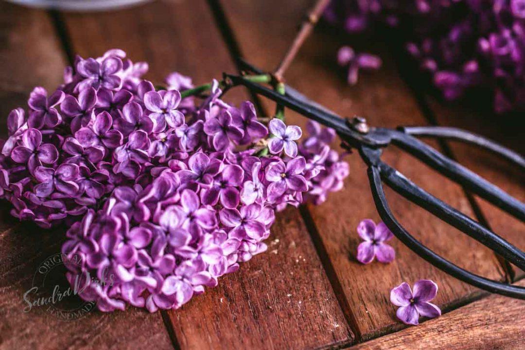 friday flowerday flieder aus muttis garten sandis kolumne. Black Bedroom Furniture Sets. Home Design Ideas