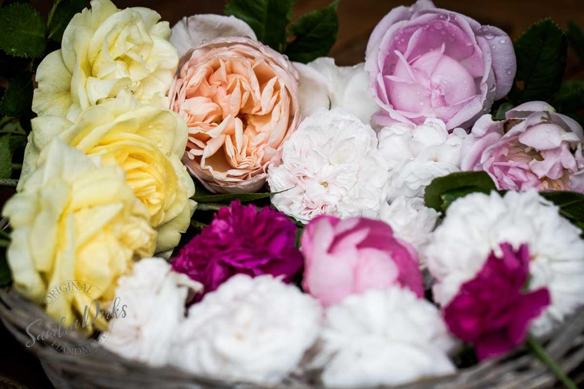 Friday Flowerday Rosenernte (1 von 36)