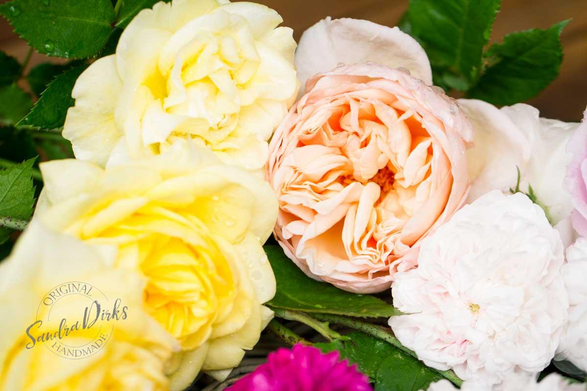 Friday Flowerday Rosenernte (2 von 36)