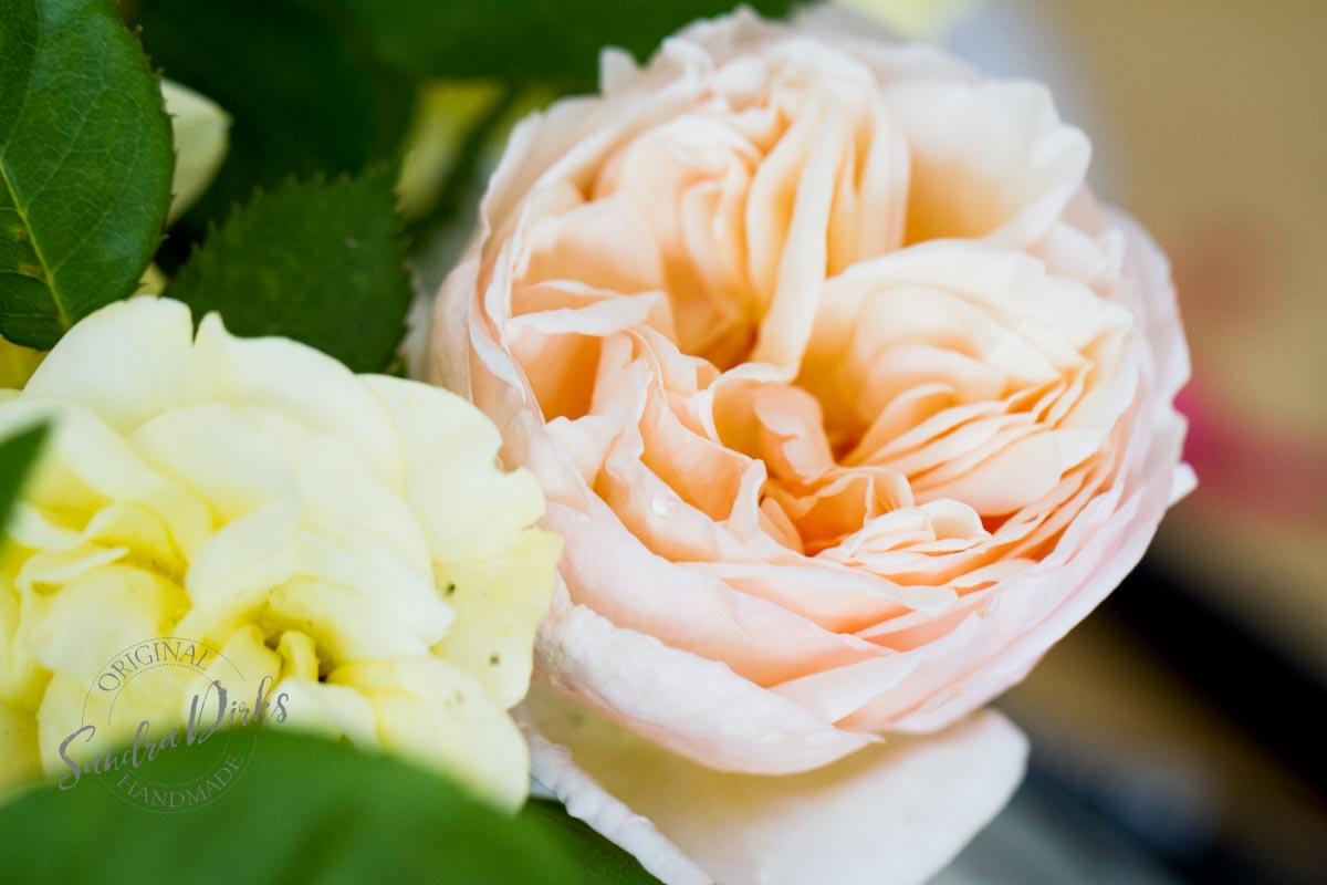 Friday Flowerday Rosenernte (7 von 36)