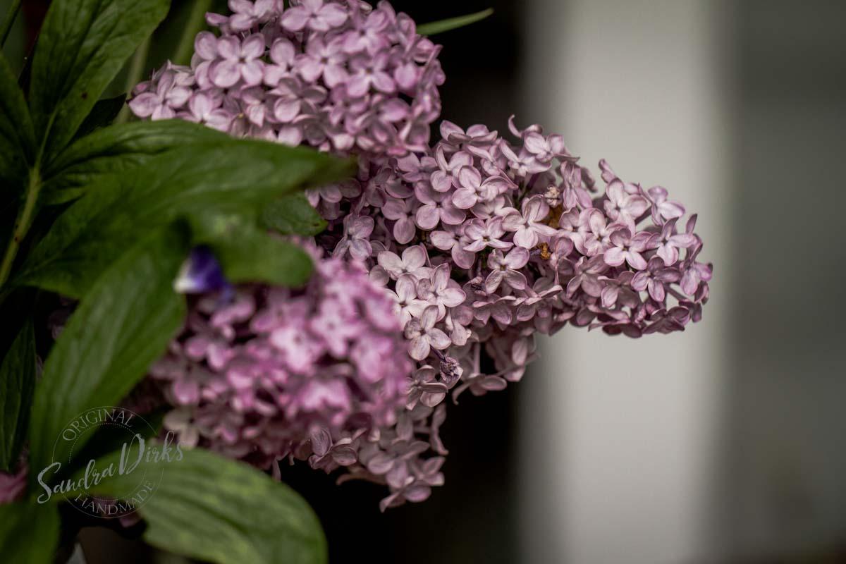 Friday Flowerday Schwiegermutterblumen Foto 2- Sandra Dirks