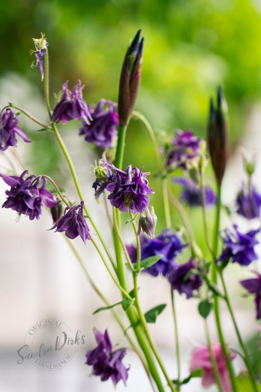 Friday Flowerday Schwiegermutterblumen Foto 5 - Sandra Dirks