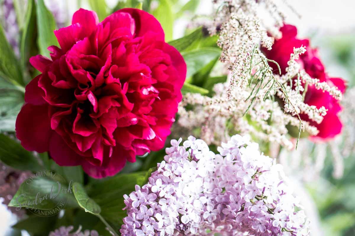 Friday Flowerday Schwiegermutterblumen Foto 6 - Sandra Dirks