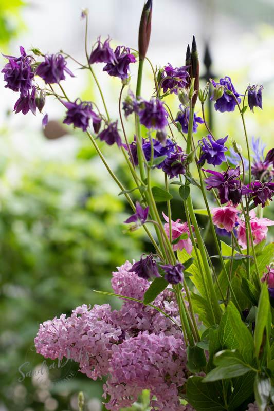 Friday Flowerday Schwiegermutterblumen Foto 8 - Sandra Dirks