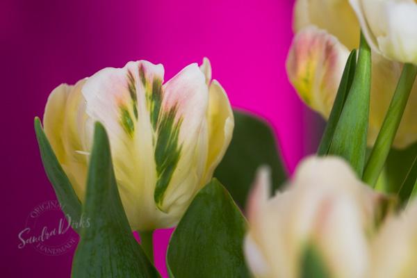 Sandra Dirks - Tulpen in Delfter Vase Tukpendetail