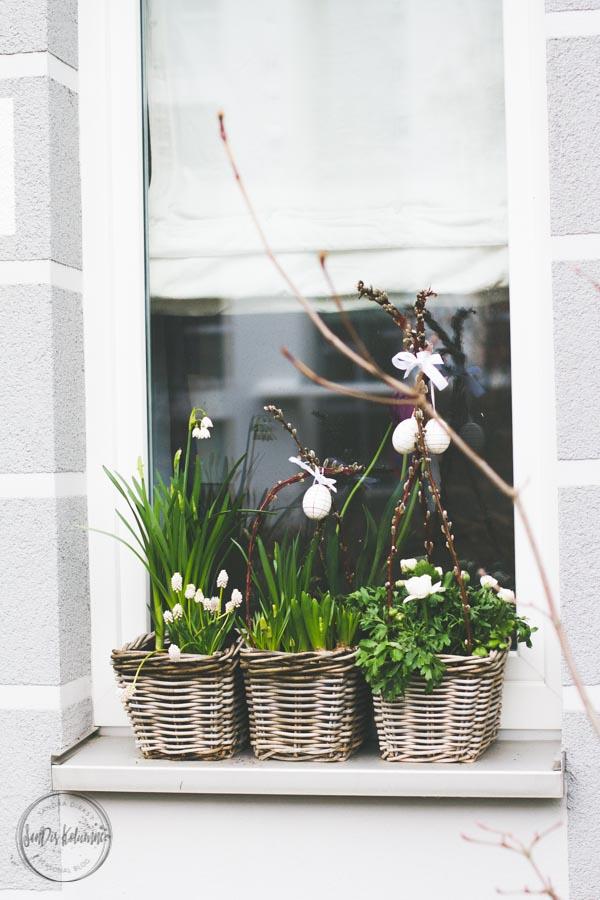 Sandra Dirks - Blumenkasten im Fenster Frühling 2017 3