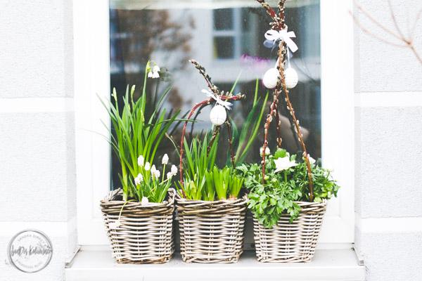Sandra Dirks - Blumenkasten im Fenster Frühling 2017 2