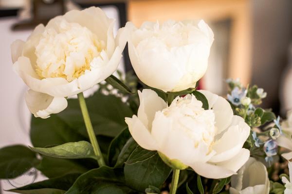 Sandra Dirks - weiße Pfingsrosen beim Friday Flowerday