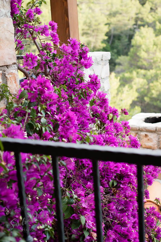 Sandra Dirks - Bougainvilea am Balkon