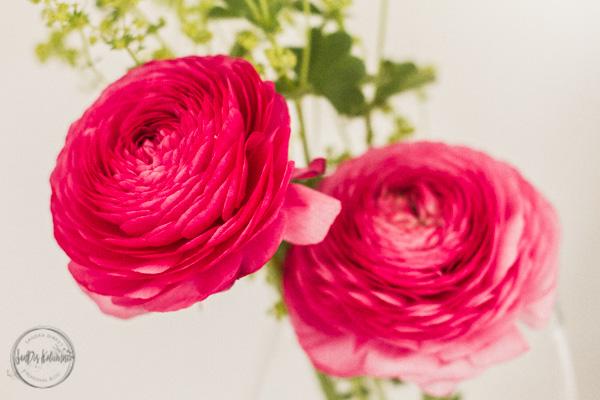 Sandra Dirks - Boggeburtstag! 10 Jahre SanDis Kolumne! Blumen