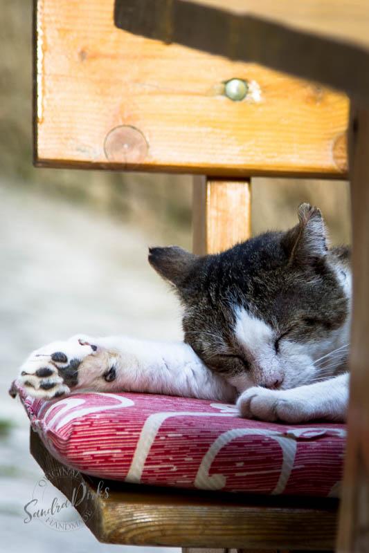 Sandra Dirks - Stari Grad Hvar schlafende Katze