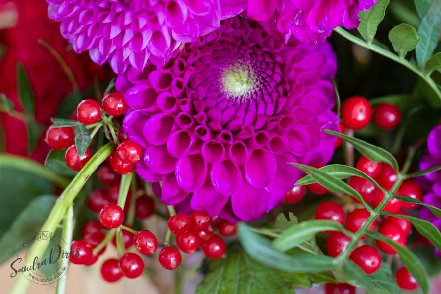 Sandra Dirks - FlowerFriday Dahlien in rot und violett