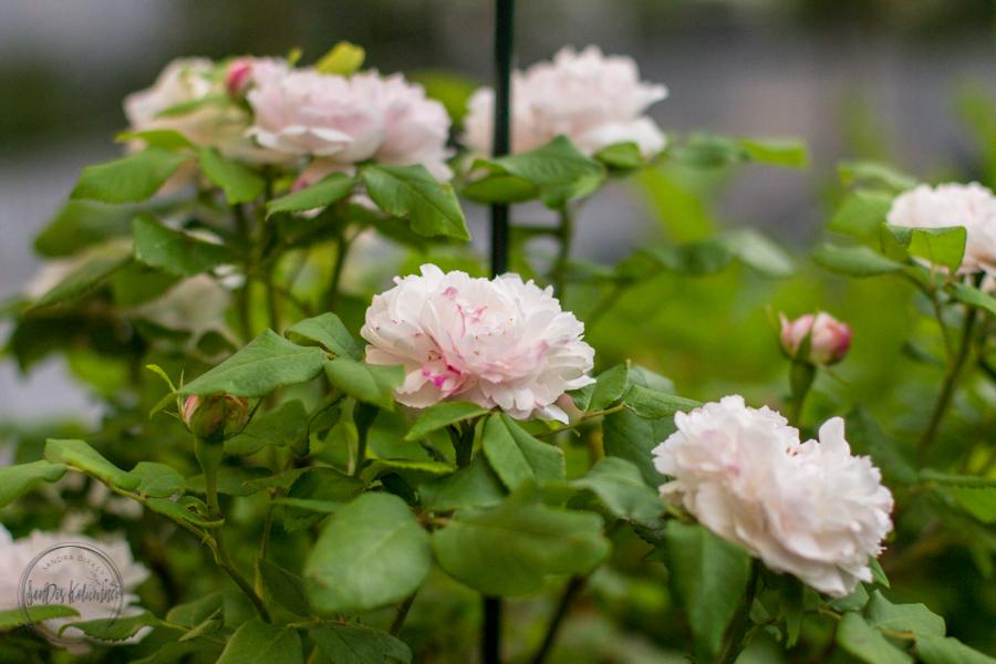 Sandra Dirks - Meine Gartensaison 2018 - Möbel, Blumen und Deko