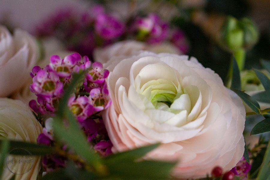 Sandra Dirks - FlowerFriday fette Ranunkeln in zartrosa in der mittelgroßen Claus Dalby Vase