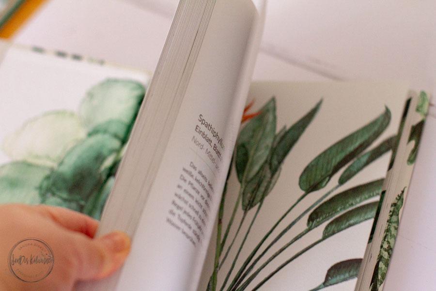 Sandra Dirks - Rezension - Urbane Botanik