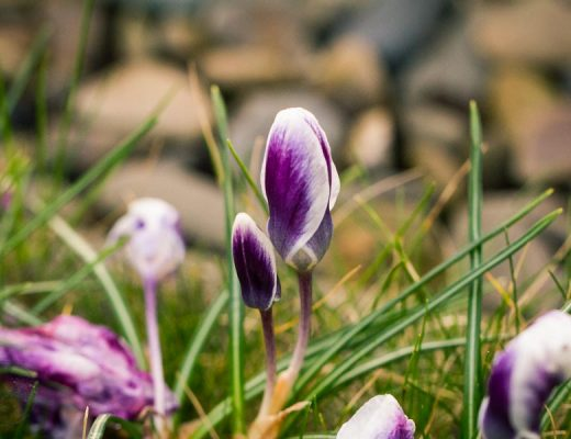 Sandra Dirks - Frühlingsblüher im Minigärtchen